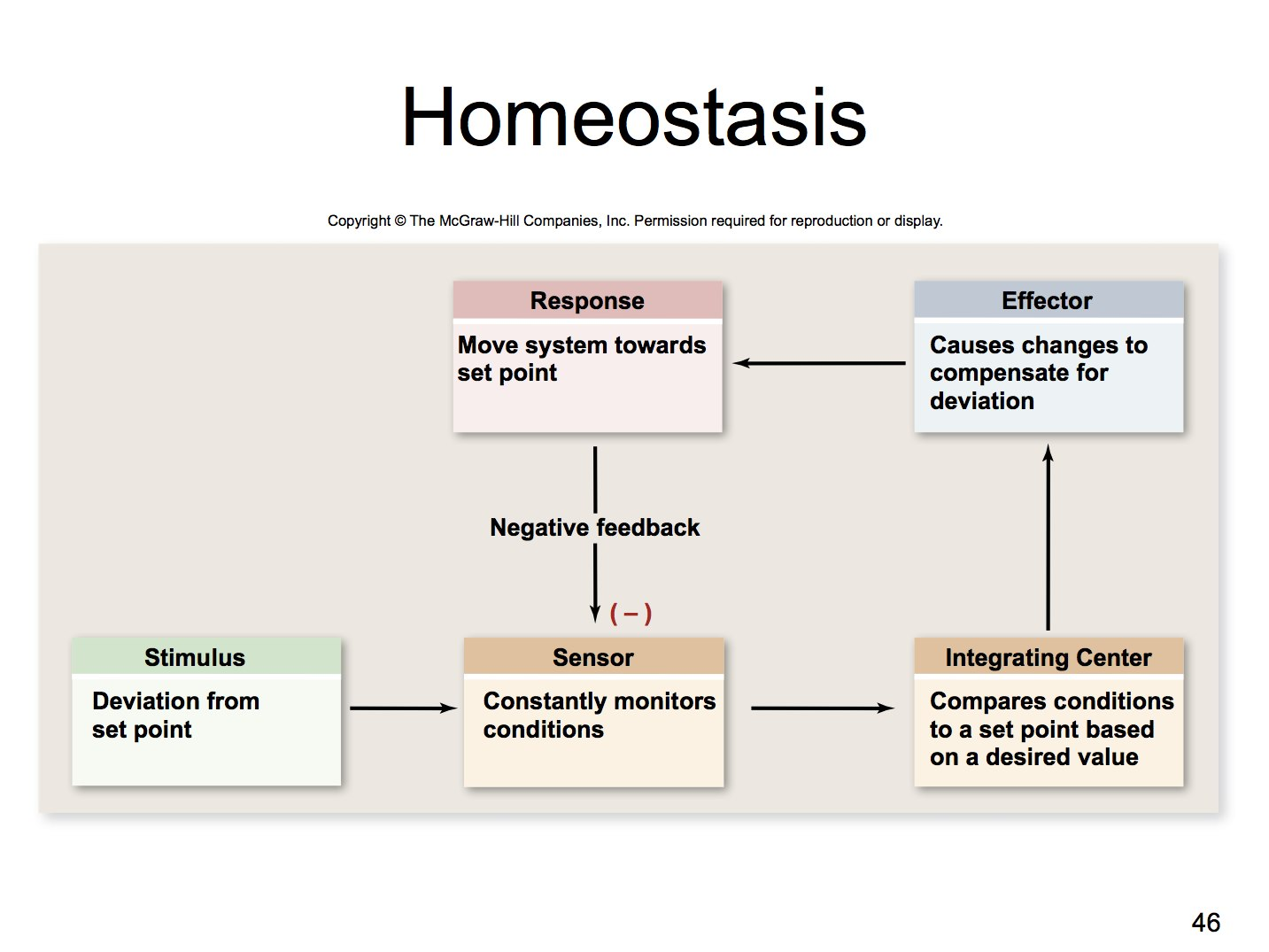 essays on homeostasis Get help on 【 homeostasis lab essay 】 on graduateway ✅ huge assortment of free essays homeostasis lab: the effects of exercise on homeostasis lab write up introduction: the purpose.