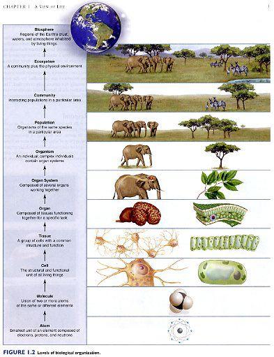 Collection of Biological Levels Of Organization Worksheet ...