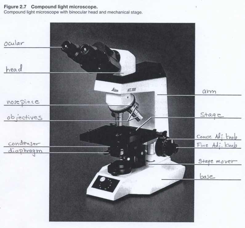 4gb1learnreswebch01 microscope figure from essentials of biology mader used by permission from mcgrawhill in biology 1407 and 1409 by dr jan a nilsson ccuart Choice Image