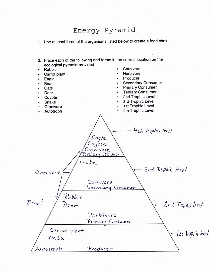 Printables Trophic Levels Worksheet ecological pyramids worksheet abitlikethis worksheet
